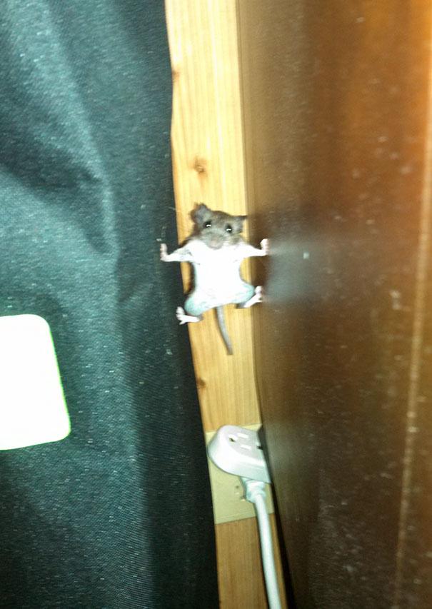 1. En mus som leker Mission Impossible