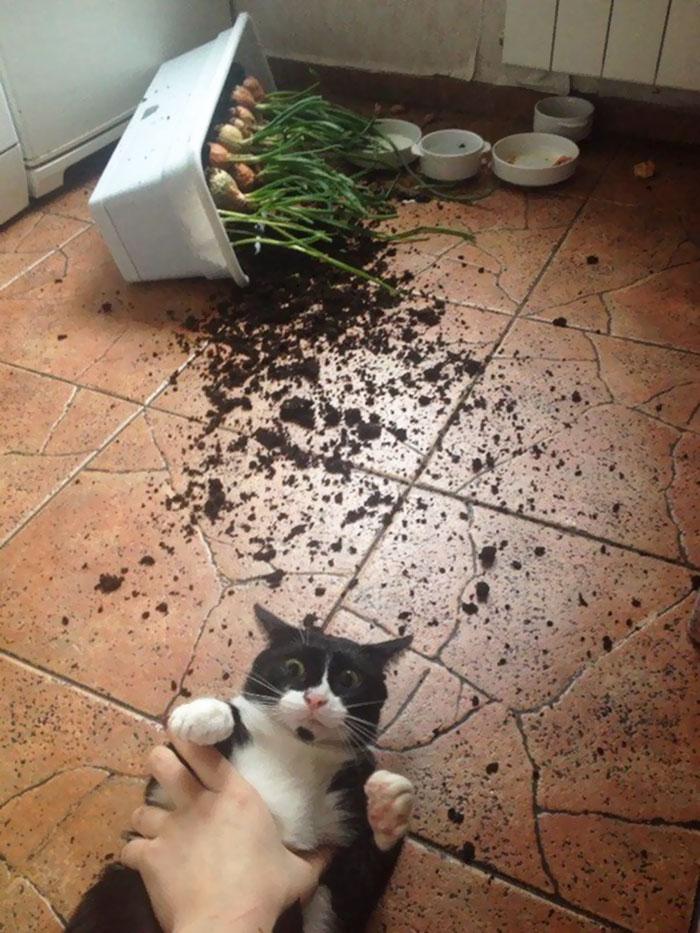 1. En katt tagen på bar gärning