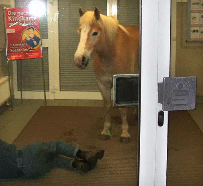 1. Vad hästen gör där finns ingen förklaring till