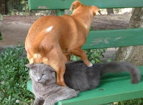 1. Den här katten verkar inte speciellt glad