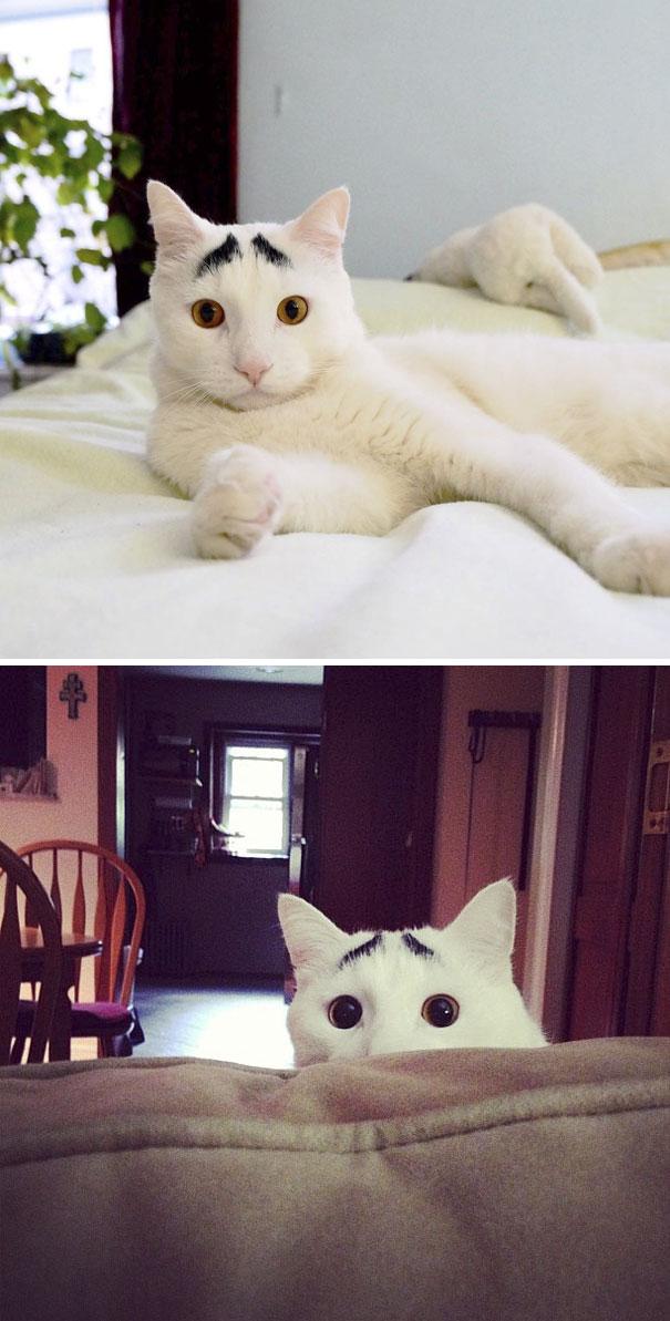 1. Katten Sam har ögonbryn