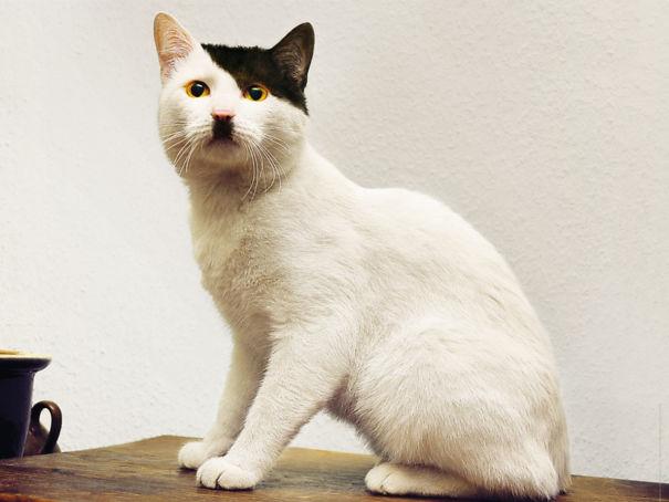 1. Den här katten heter Adolf
