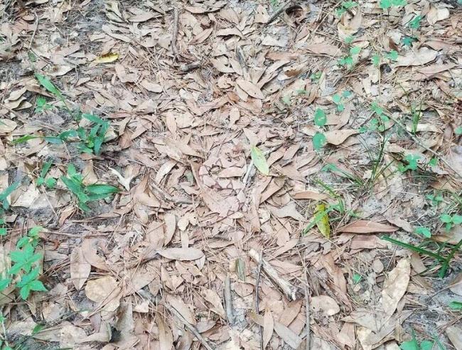 1. Kan du hitta ormen?