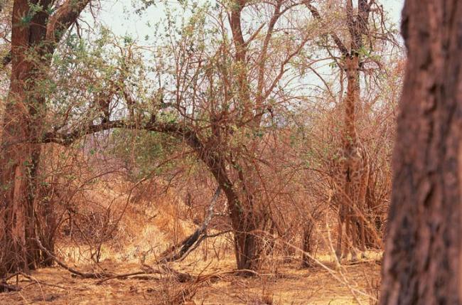 8. Hittar du giraffen?