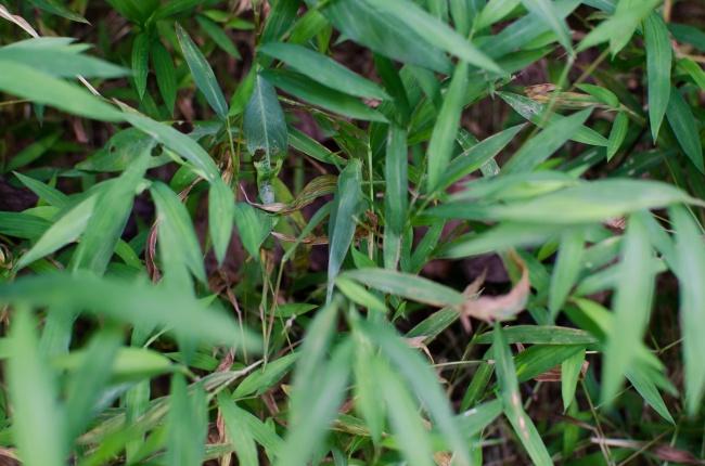 10. Ser du gräshoppan?