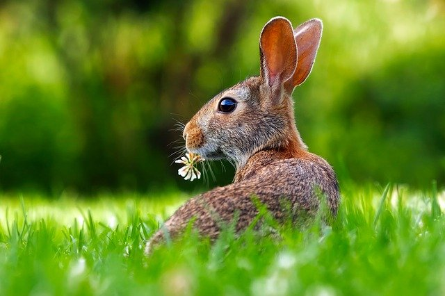 Såg du en kanin först?