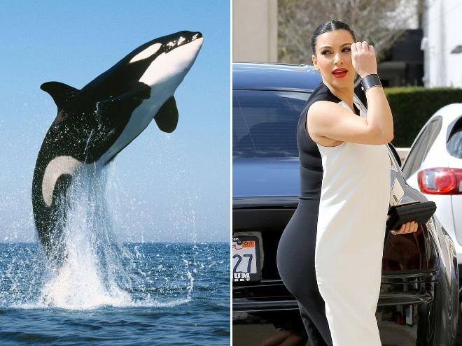 1. Späckhuggare och Kim Kardashian