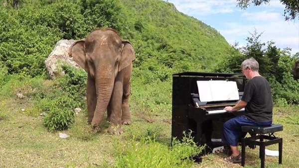 Han ställde sitt piano i skogen och började spela för den blinda elefanten - ett helt underbart ögonblick