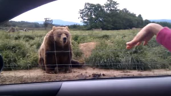 Hon vinkade glatt till björnen – det som händer sen var minst sagt oväntat
