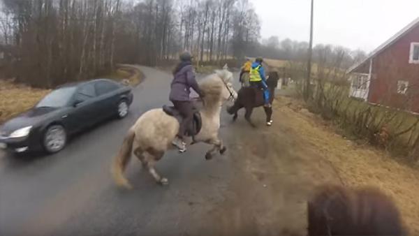 I full fart kommer den här bilisten körandes mot hästarna - det här får alla djurvänner att koka