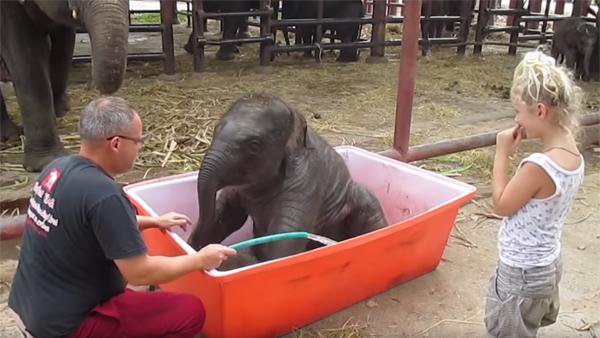 Elefantbebisen upptäcker ett badkar för första gången - hans härliga reaktion är bara så underbar