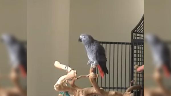 Den här papegojan har förbluffat en hel värld - du kan aldrig ana varför