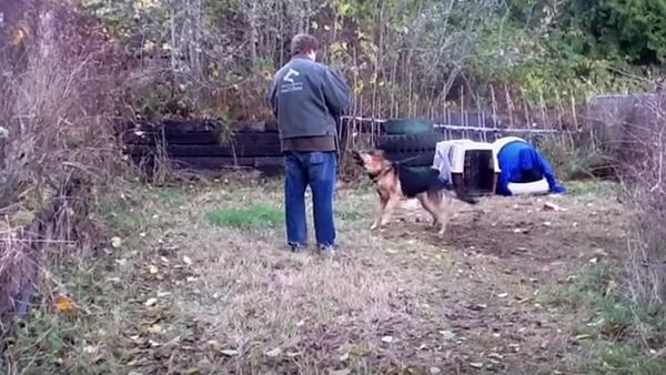 Hunden har varit fastkedjad nästan hela livet och är mycket aggressiv - se nu vad som händer när de tar bort kedjan