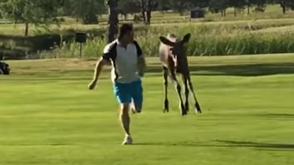 Han var ute på en härlig golfrunda när han plötsligt fick oväntat besök - snacka om panik
