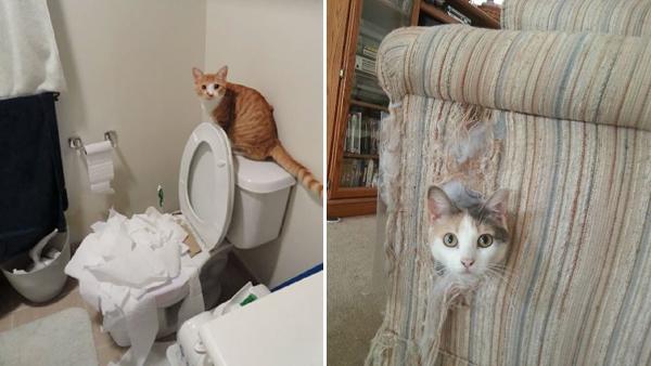 11 bilder på katter som haft tråkigt hemma - vilken hemsk röra det blev