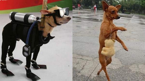 12 bilder på hundar som verkar ha glömt bort att de är hundar