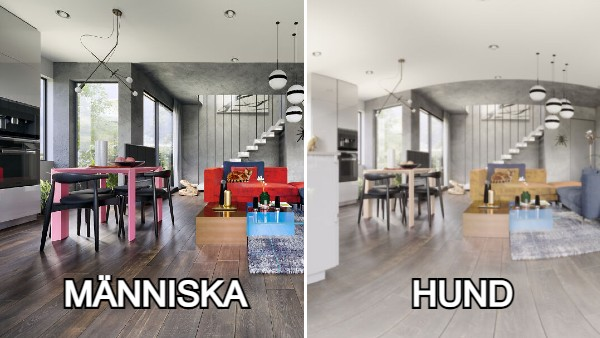 Hur 7 olika husdjur ser rummet vs. hur en människa ser samma rum