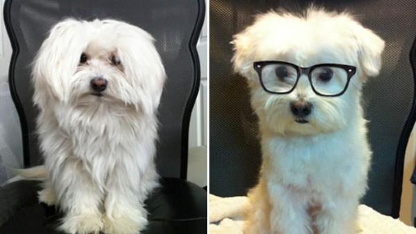 17 bilder på hundar före och efter klippning – så söta att hjärtat verkligen smälter